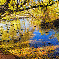 The Autumn Leaves by Tim Reaves