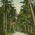 The Avenue Of Palms Guam Li by eGuam Photo