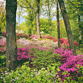 The Azalea Woodland by Jessica Jenney