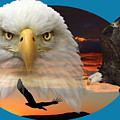 The Bald Eagle 2 by Shane Bechler
