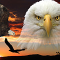 The Bald Eagle by Shane Bechler