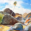 The Baths Palm Tree by Carlin Blahnik CarlinArtWatercolor