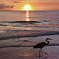 The Beachcomber Shuffle by HH Photography of Florida