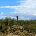 The Beautiful Desert I Love by Teresa Stallings
