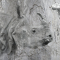 The Beautiful Rhino by Maria Astedt
