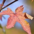 The Beauty Of Fall by Jeramey Lende