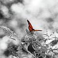The Beauty Of Orange by Lori Tambakis