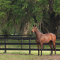 The Beauty Of The Thoroughbred by Eleszabeth McNeel