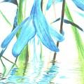 The Beauty Of Watery Reflection by Aditi Dewangan