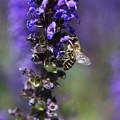 The Bee Hover by Deborah Benoit