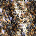 The Bees Hive It by Jack Norton