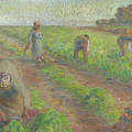 The Beet Harvest by Camille Pissarro