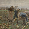 The Beet Harvest by Emile Claus