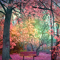 The Bench That Dreams by Tara Turner