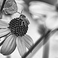 The Best Gardener - Bw by Steve Harrington