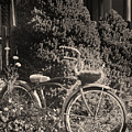The Bicycle Garden II by Jim Furrer