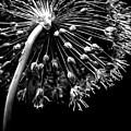 The Big Bang by James Aiken