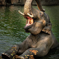 The Big Elephant Yawn by Jean Noren
