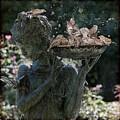 The Bird Bath by Chris Lord