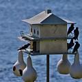 The Bird Hotel by Cynthia Guinn