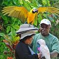 The Bird Lady At Ardastra Gardens by Margaret Bobb