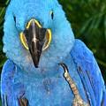 The Bird by Lisa Renee Ludlum