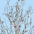 The Bird Tree by David Lipsy