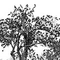 The Birds And The Tree by Helton Mendes