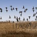 The Birds by Angel Ciesniarska