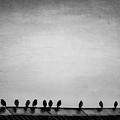 The Birds by Francesca Winspeare