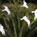 The Birds by Marc Bittan