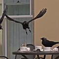 The Birds by Rona Black