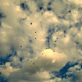 The Birds by Susanne Van Hulst