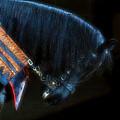 The Black Horse II by Amanda Struz