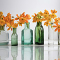 the Blooming yellow Ornithogalum Dubium in a transparent bottle instead vase by Elena Rostunova