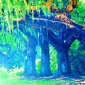 The Blue Live Oaks by Donna Bentley