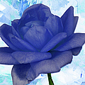 The Blue Rose by Ericamaxine Price