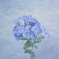 The Blues by Kim Hojnacki