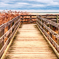 The Boardwalk by Linda Pulvermacher