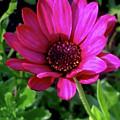 The Botanical Garden Zagreb Floral #9 by Jasna Dragun