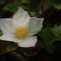 The Boulder Raspberry Flower by Brian Gustafson