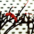 The Branches Naked By Wind And Rain. by Alexander Vinogradov