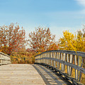 The Bridge To Autumn by Regina Geoghan