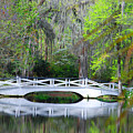 The Bridges In Magnolia Gardens by Susanne Van Hulst