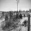 The Broken Fence by Jost Houk