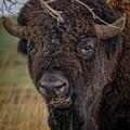 The Buffalo 2 by Ernie Echols
