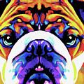 The Bulldog By Nixo by Supreme Inc