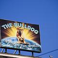 The Bulldog On Top Of The World by Lauren Pfahlert