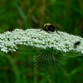 The Bumblebee And The Fly by RiaL Treasures