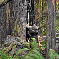 The Burly Bear Cub - Muir Woods National Monument - Marin County California by Michael Mazaika
